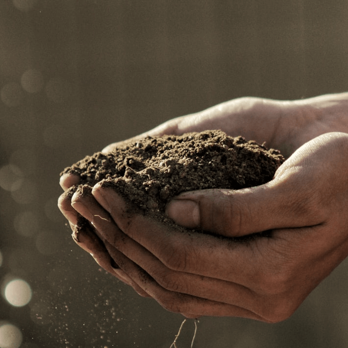 Soil and hands